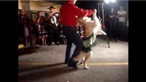 Salsa Dancing Dog.mp4   YouTube