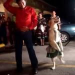 サルサを踊るダンスドッグ!ステップはもちろんターンまでなんでもござれ