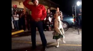 Salsa Dancing Dog.mp4   YouTube2